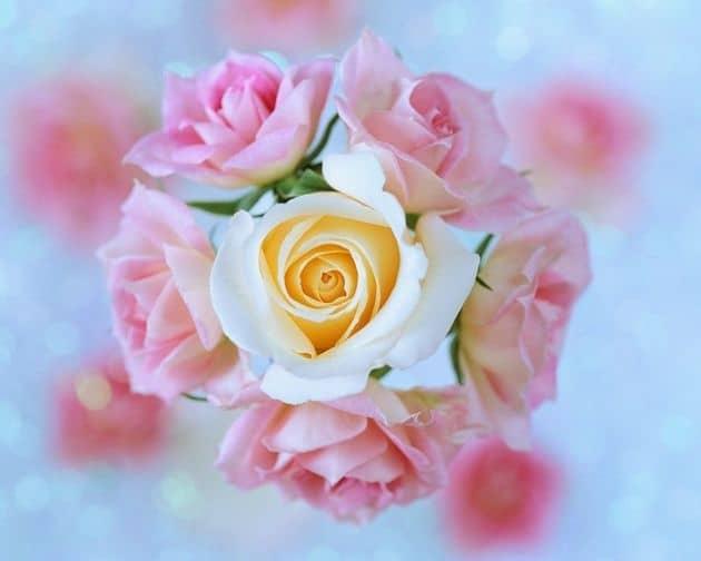 6d1e5c49b492af74c789e86df6f68797 - ▷ Estas flores son para ti 📖