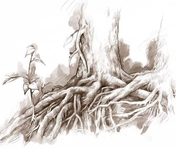 6eee9cef32f7f18cecc8f9db6a2c7e09 - ▷ Sin raíces 📖