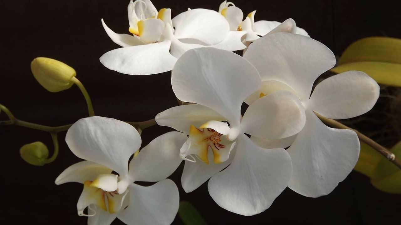 7a0fedcef13e85a941dc364a9cbe4e6e - ▷ Como las flores 📖