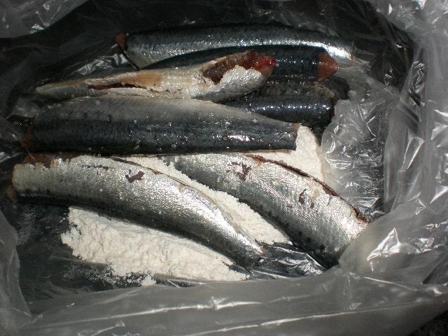 Meter sardinas con harina