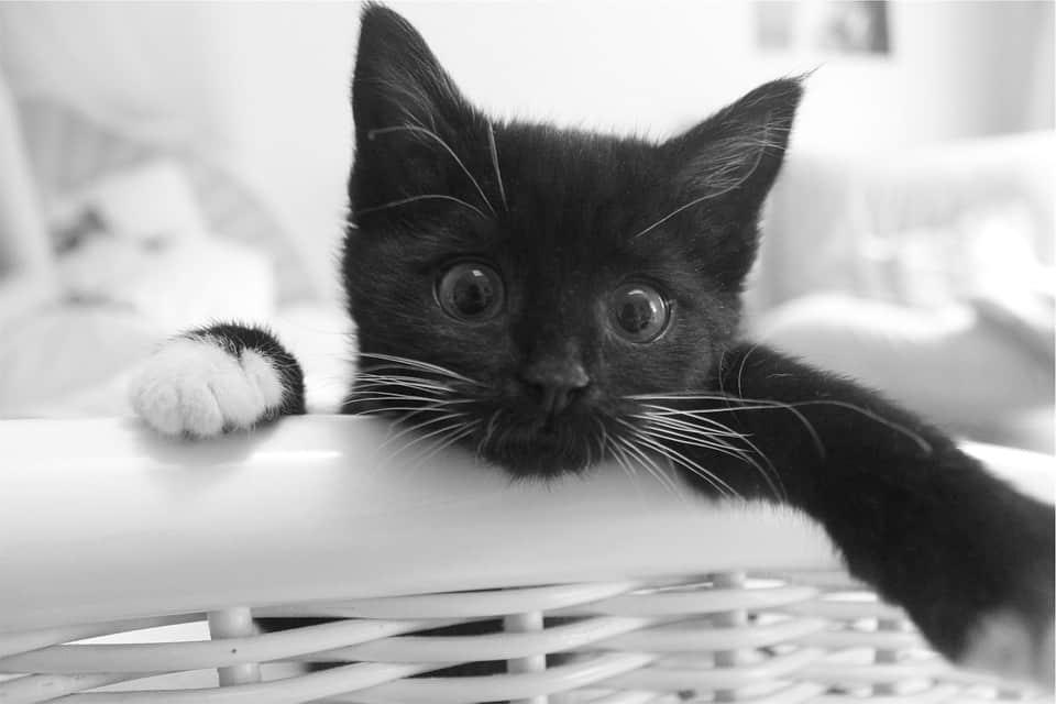 2c1d1046656edddd5b34d744b3e4e165 - ▷ A un gato negro 📖