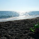 ▷ Embriagarse de olor a mar ✍