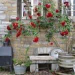 ▷ Aroma de rosas 📖