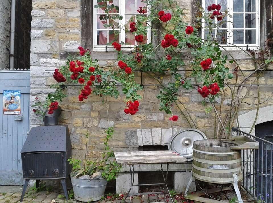 27e7bd57eb75c30b31187bc1ee6beaed - ▷ Aroma de rosas 📖
