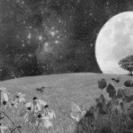 ▷ Relato sobre la hierba 📖