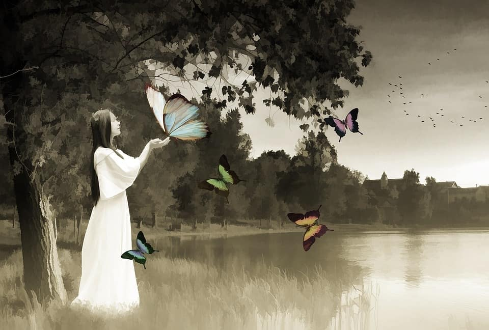 3abdb0004eb349988eb30e27183f7c82 - ▷ Contemplando mariposas 📖