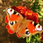 ▷ Atrapar una mariposa 📖