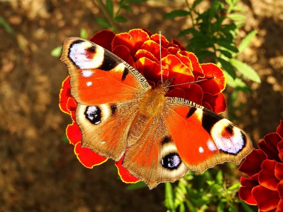 8f44dd75ab290891b2792d9238e8062a - ▷ Atrapar una mariposa 📖