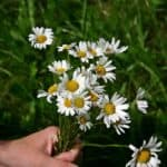 ▷ Flores silvestres 📖