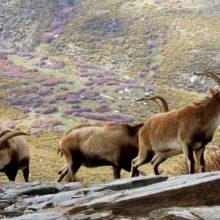 De caza en la Serranía